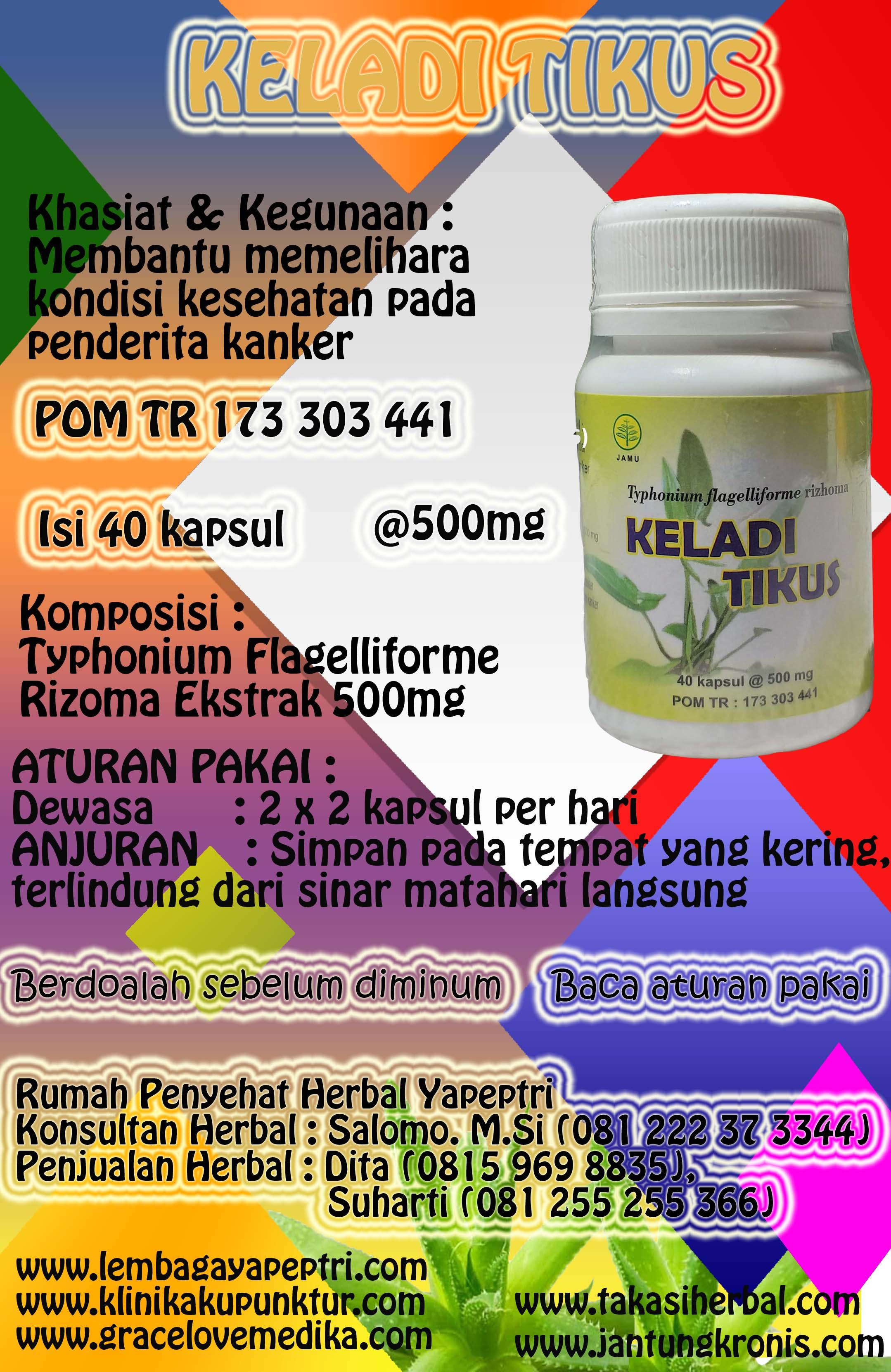 HERBAL KELADI TIKUS Digunakan Untuk mengobati Kanker dan Tumor