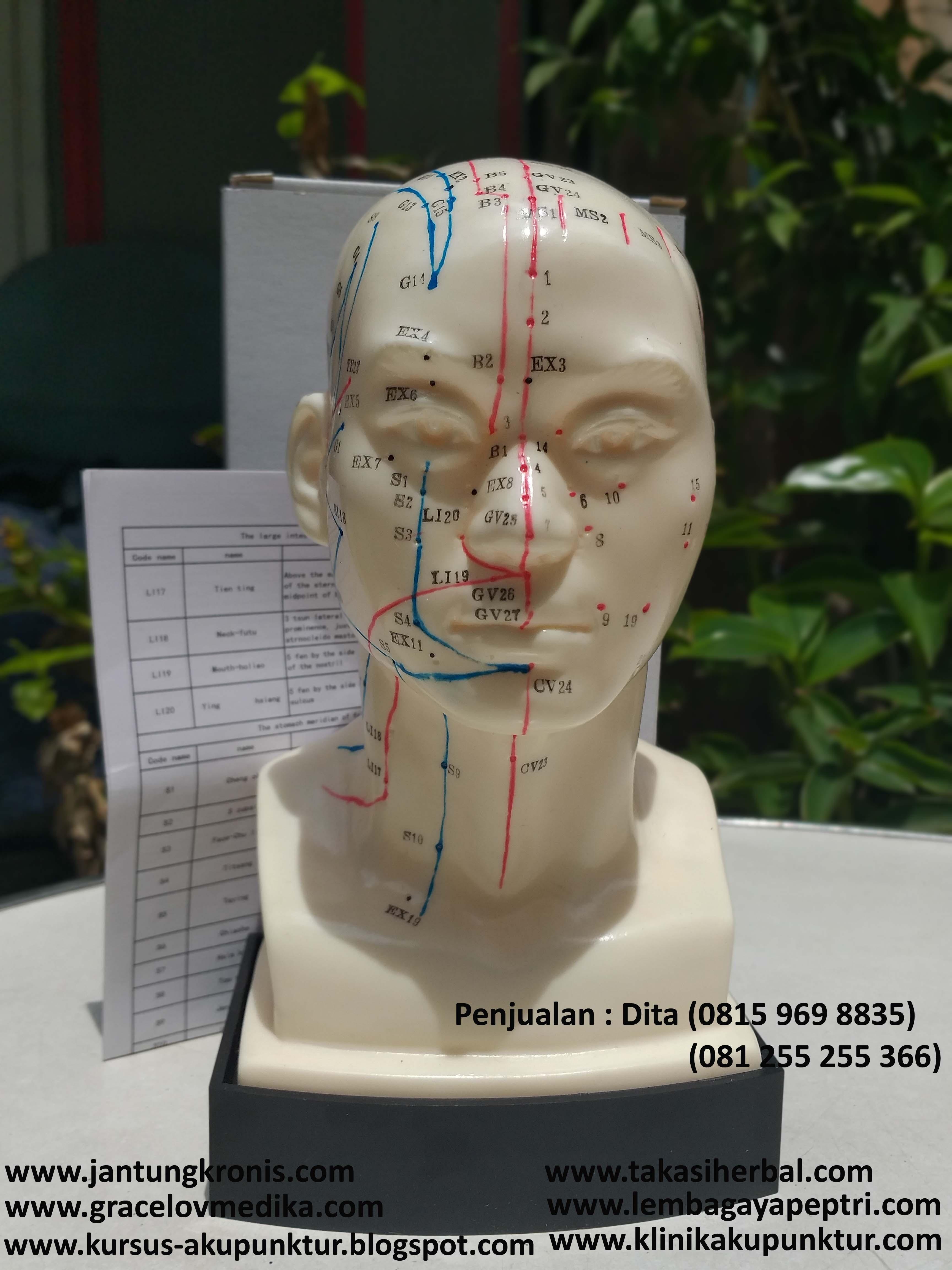 Patung Akupunktur Kepala/Manekin kepala